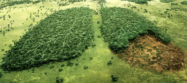 Proje: Türkiye'nin Bozkır Ekosistemlerinin Koruma