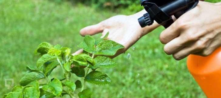 <b>Bitki koruma ürünleri</b> online satış yasağı